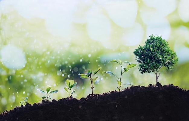 Маленькие деревья разных размеров на фоне брызг воды, концепция охраны окружающей среды и всемирный день окружающей среды с концепцией ксо