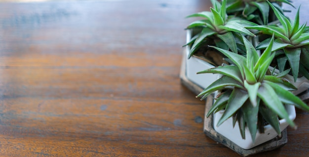Small trees in pots with copy space on a wooden table
