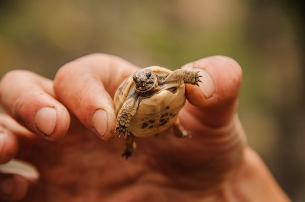 Small turtle in a hand of human