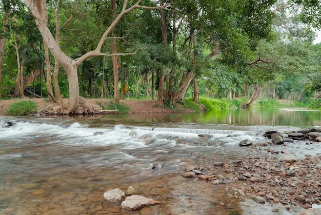 新鮮な緑の木々の森、自然の静かな風景の川の流れの小さな滝