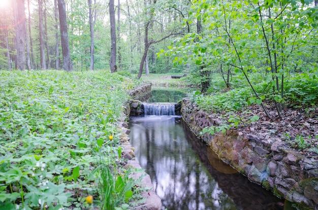 森の中の小さな美しい小川の小さな滝