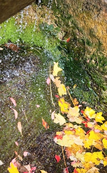 Small waterfall with abscissed yellow leaf in autumn park