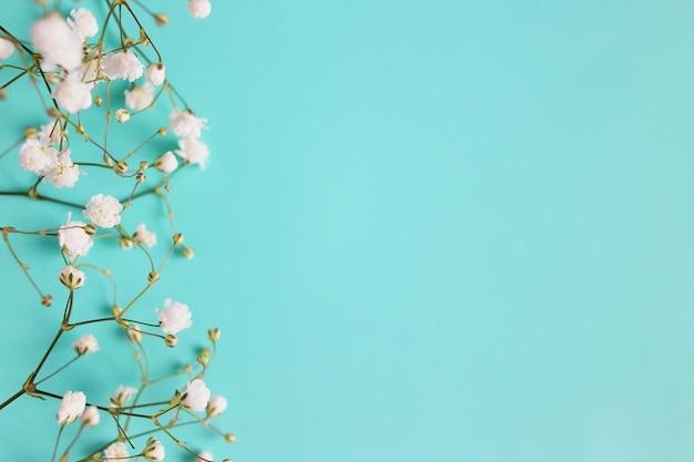 小さな白い美しい花。花カスミソウ