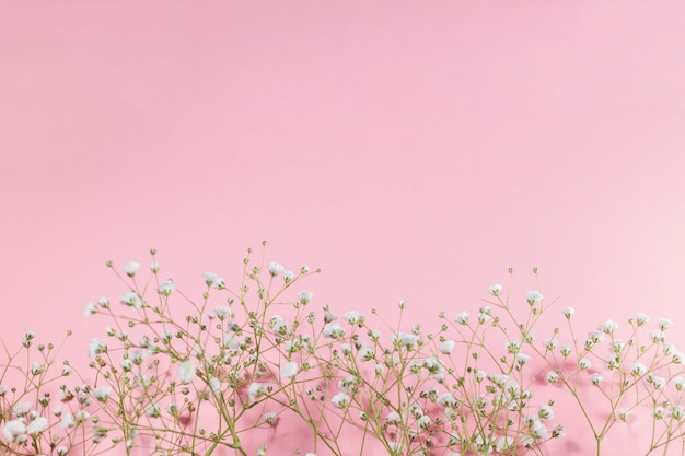 Small white blooming flowers on pink background
