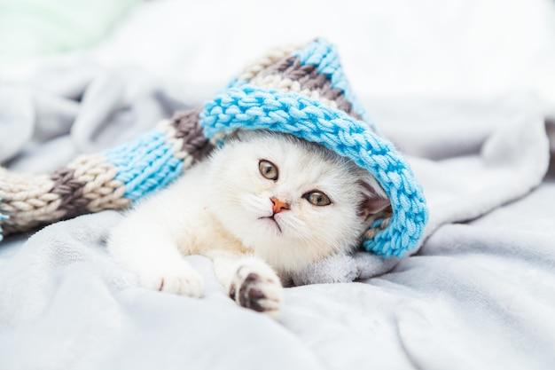 Маленький белый британский котенок в полосатой шляпе на белом одеяле. забавный любопытный питомец. скопируйте пространство.