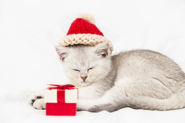 Small white british kitten in a red hat with a red gift box sleeps on a white blanket. funny curious pet. copy space.