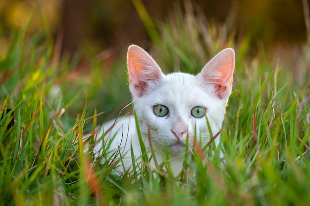 草の上に小さな白い猫-若い猫