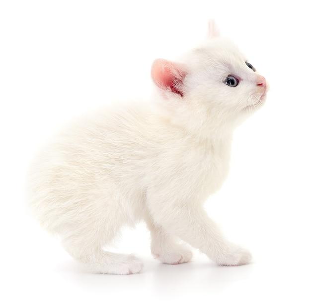 Маленький белый цыпленок, изолированные на белом фоне.
