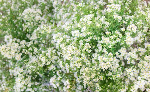 緑の葉の背景でぼやけた小さな白いデイジーの花。