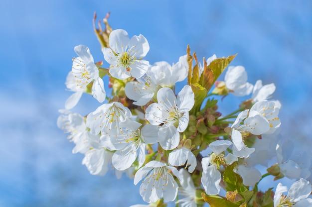 Маленькие белые цветы на фоне неба