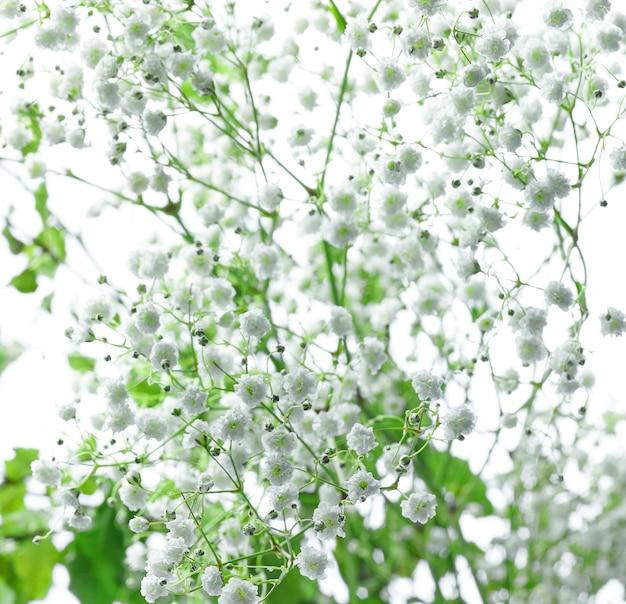 Маленькие белые цветы фон, выборочный фокус