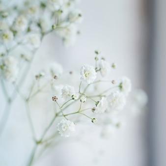 Маленькие белые цветы (gypsophila paniculata) размыты, селективный фокус. Premium Фотографии