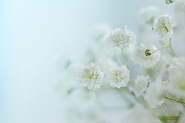 Small  white flowers (gypsophila paniculata) blurred, selective focus.