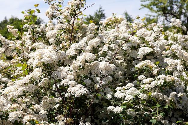 개화 중 나무에 흰색 작은 꽃