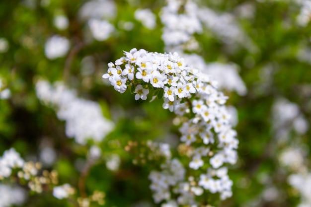 枝の花の背景に小さな白い花