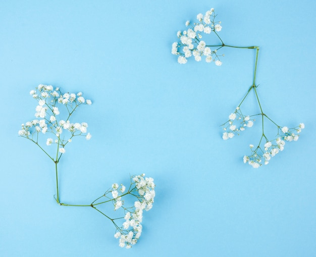 Small white gypsophila on blue background