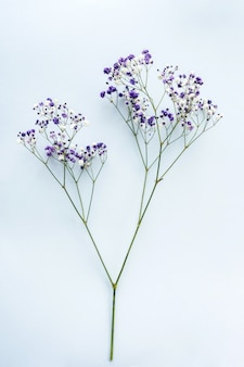 Small white gypsophila flowers on a blue background, space for text, minimalism