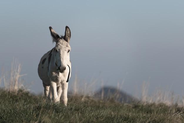 山の牧草地の小さな白い馬