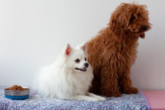 Маленькая белая померанская собака лежит на циновке рядом с миской с едой с одной стороны, а миниатюрный красно-коричневый пудель сидит с другой стороны.