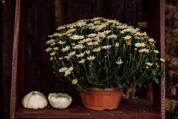小さな白いカボチャは菊の近くの木製のテーブルの上に横たわっています