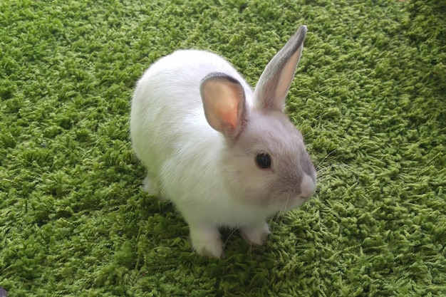 Small white rabbit with gray stripe sitting on green carpet