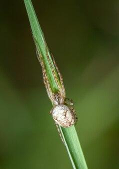 Маленький белый паук прячется на траве