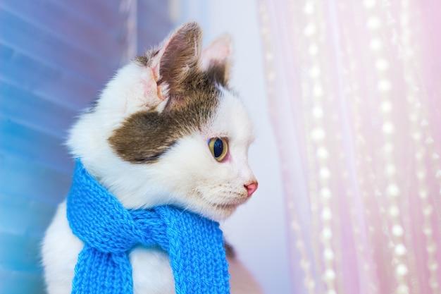 파란 스카프에 작은 흰색 발견 된 고양이. 패션. 프로필의 초상