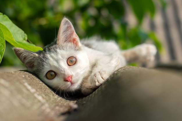 Small white spotted kitten resting on the roof in sunny weather