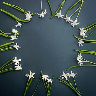 コピー スペース付きの濃い緑の表面に小さな白い春の花チオノドクサ