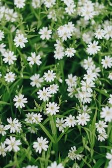 緑の葉を背景に小さな白い春の花