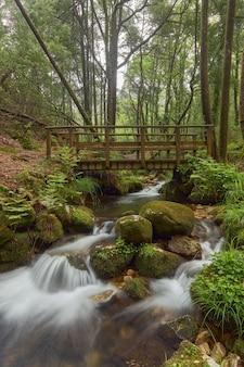 스페인 갈리시아 지역의 아름다운 숲에 있는 강 위의 작은 나무 다리.