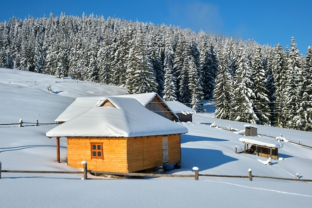 Small wooden house covered with fresh fallen snow surrounded with tall pine trees in winter mountains.
