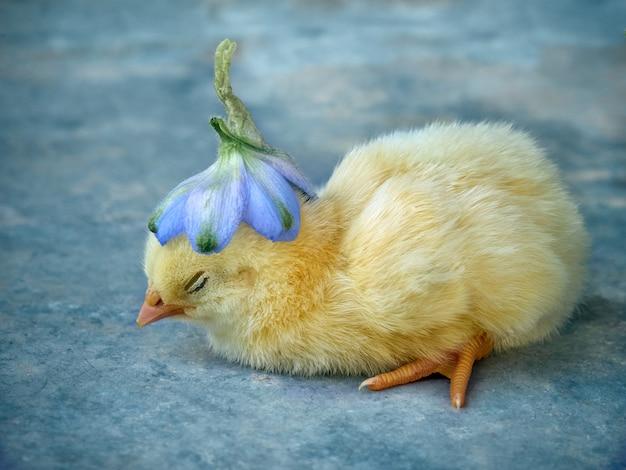 農場で小さな黄色の鶏。