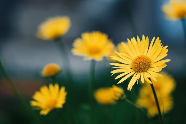 오렌지 센터 꽃이 야외에서 작은 노란색 데이지
