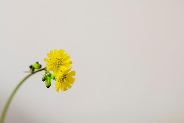 작은 노란색 꽃이 격리되었습니다. 미니멀리즘