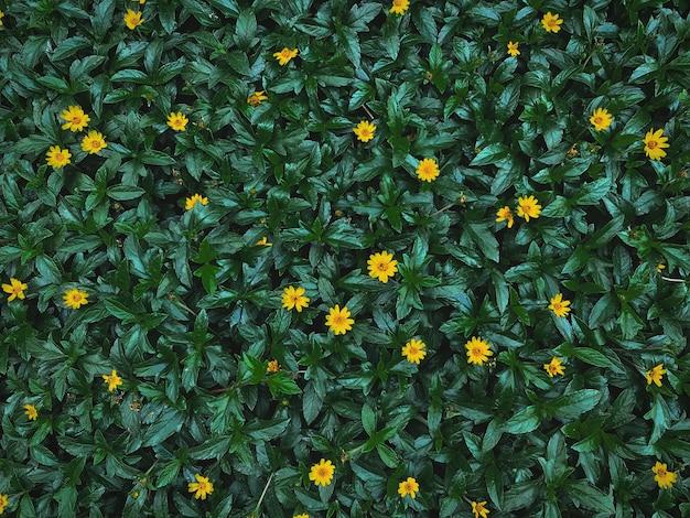 フルフレームの濃い緑の葉の背景に小さな黄色い花