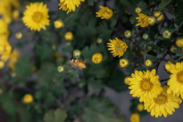 公園内の小さな黄色い野生の菊