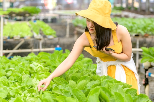 Smart agriculture, farm , sensor technology concept. farmer hand using smart phone for monitoring temperature , humidity , pressure , light of soil in strawberry farm.