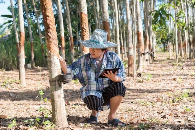 Smart farmer agriculturist rubber tree plantation