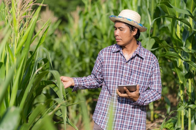 Smart farming agricultural technology, asian farmer in hat using a digital tablet standing in his farm in corn field under blue sky