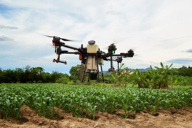 Умное сельское хозяйство сельскохозяйственный дрон летит для опрыскивания кукурузных полей, фермеры распыляют инсектициды с помощью сельскохозяйственных дронов