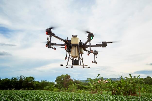 스마트 농업 농업 드론은 옥수수 밭에 살포하기 위해 날아가고, 농부는 농업 드론으로 살충제를 뿌립니다.