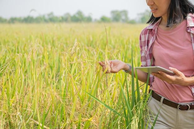 Agricoltura intelligente utilizzando le moderne tecnologie in agricoltura. giovane agricoltore agronomo femminile asiatico con computer tablet digitale nel campo di riso utilizzando app e internet, l'agricoltore si prende cura del suo riso.