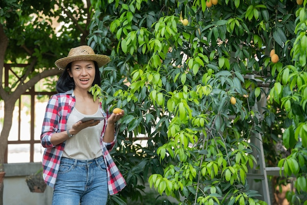 농업에서 현대 기술을 사용한 스마트 농업. 디지털 태블릿 컴퓨터가있는 여성 농부, 앱과 인터넷을 사용하는 농장 마리안 매실의 전화, 마리안 매화, 마리안 망고. (태국어로 mayongchid)