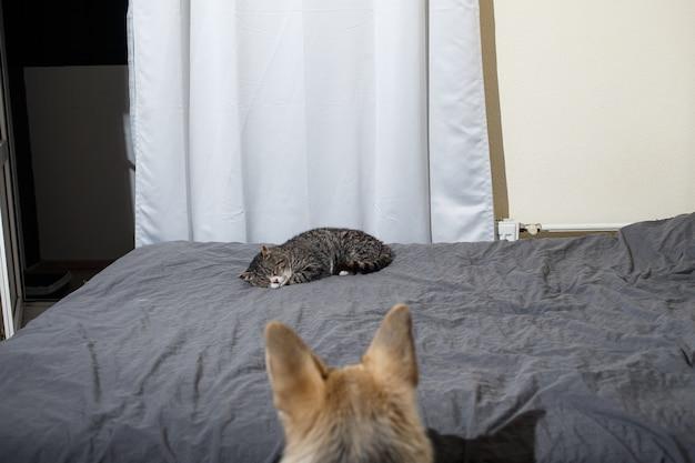 寝室のベッドで寝ている怠惰な灰色のぶち猫を見ているスマートフレンドリーな犬
