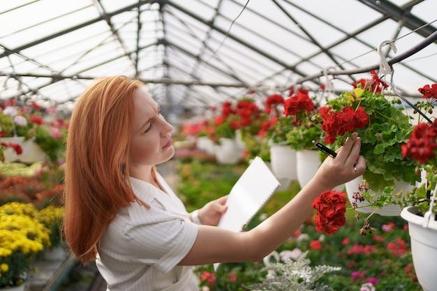 スマート温室制御。女性労働者は日光の下で赤い花を検査し、データを記録します