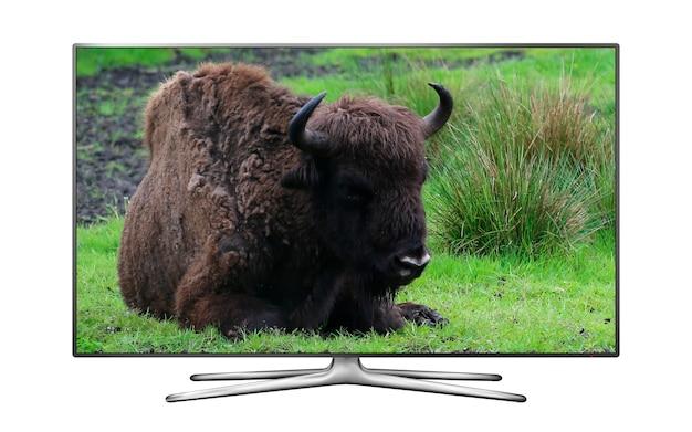 森林伐採の壁紙で休んでいるオーロックスで分離されたスマートテレビ