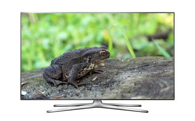 画面上のカエルと分離されたスマートテレビ