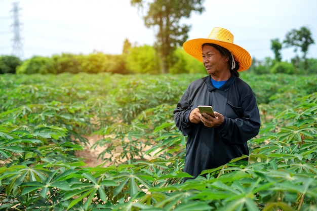 Smart woman farmer holding tablet standing in cassava field for checking her cassava field. agriculture and smart farmer success concept