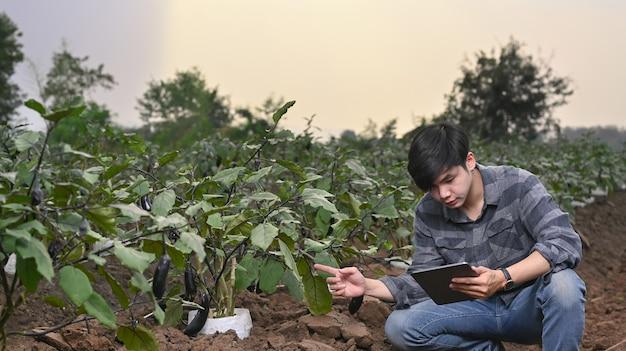 똑똑한 젊은 아시아 농부는 태블릿을 사용하여 유기농 수경 채소 정원의 품질과 양을 확인합니다.